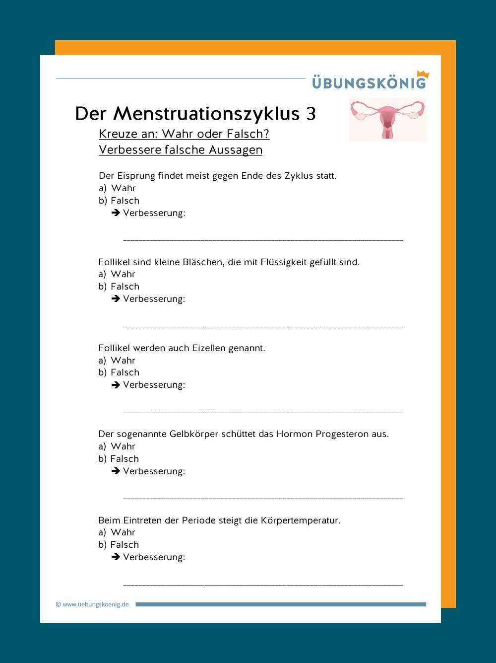 Der Menstruationszyklus