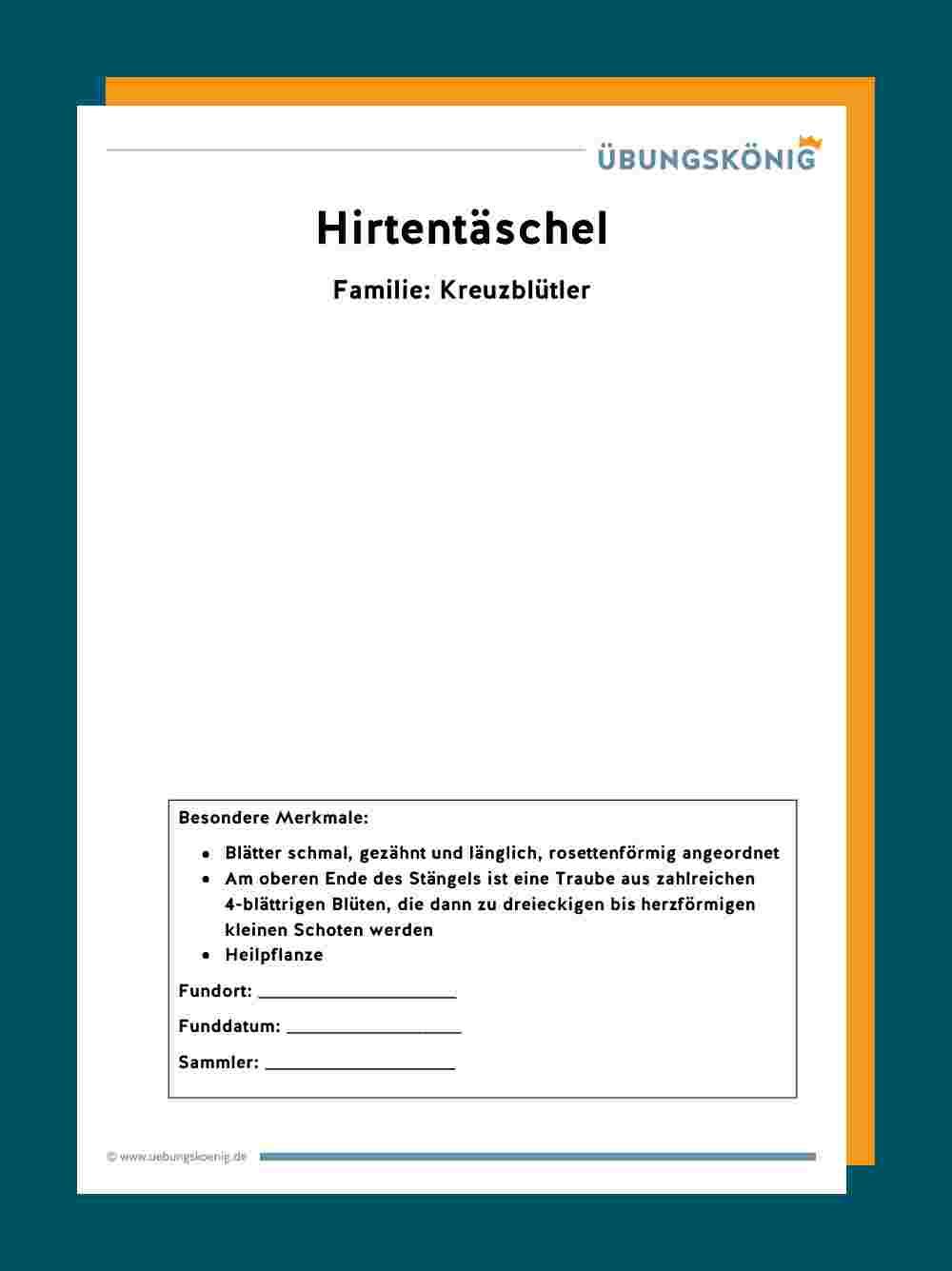 Wiese Herbarium Gestalten Grundschule Und 6
